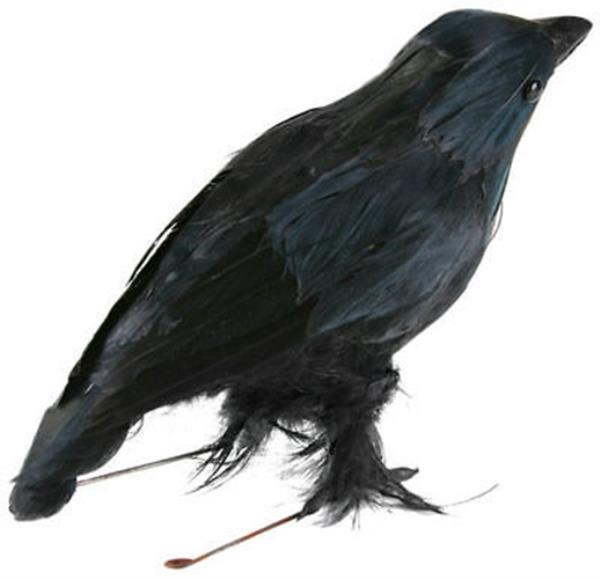 Crow Bird Prop : Fake stuffed halloween black crow bird prop raven