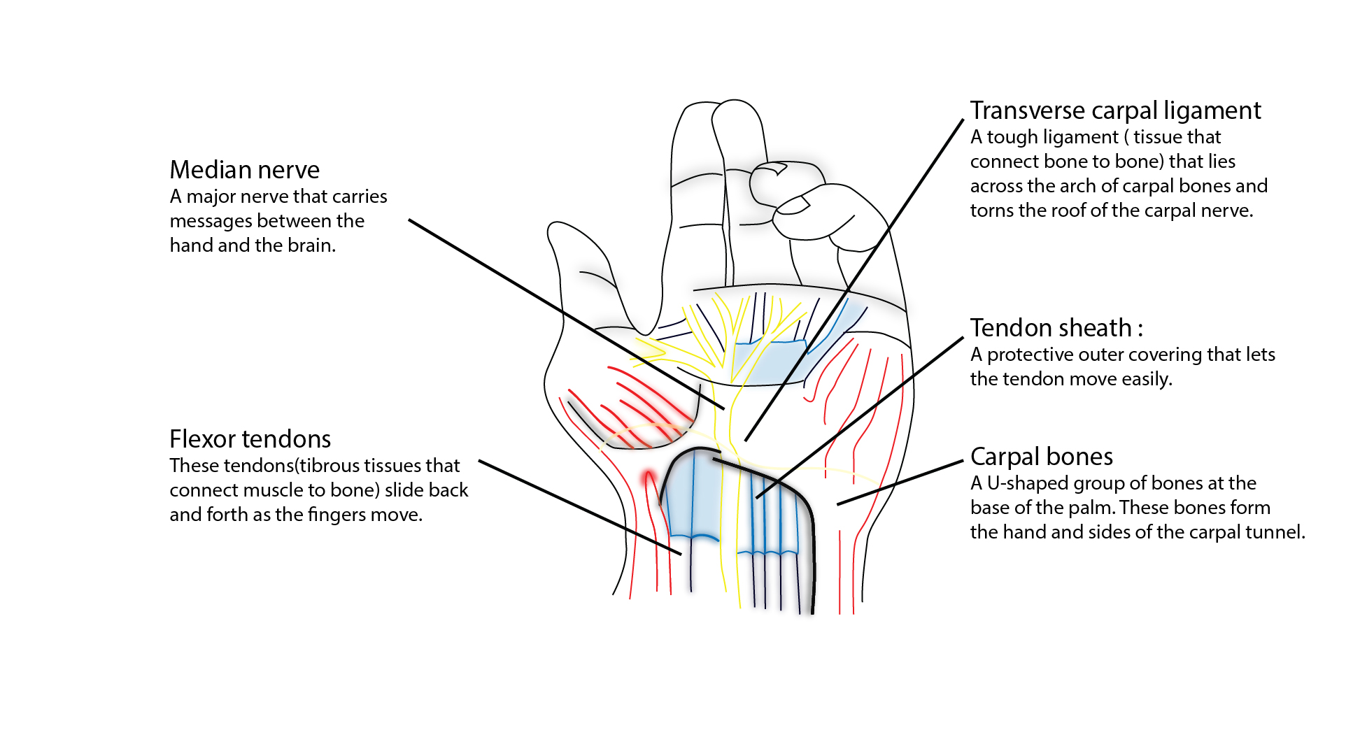 anatomy of wrist pressure during lagree, pilates, yoga