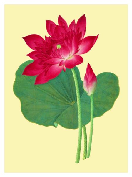 Asian Sacred Lotus Flower Japanese Woodblock Counted Cross Stitch