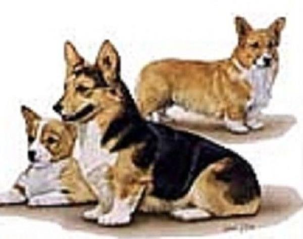 Retired Dog Breed WELSH CORGI FAMILY Vinyl Softcover Address Book by Robert May